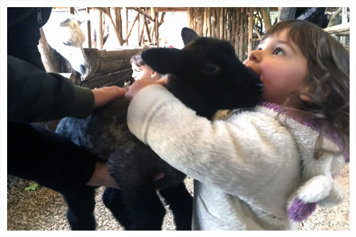 Pet Therapy - Piccola Fattoria di Sermoneta